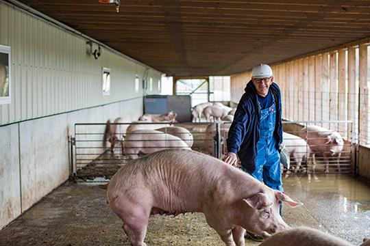 Yorkshire Pork